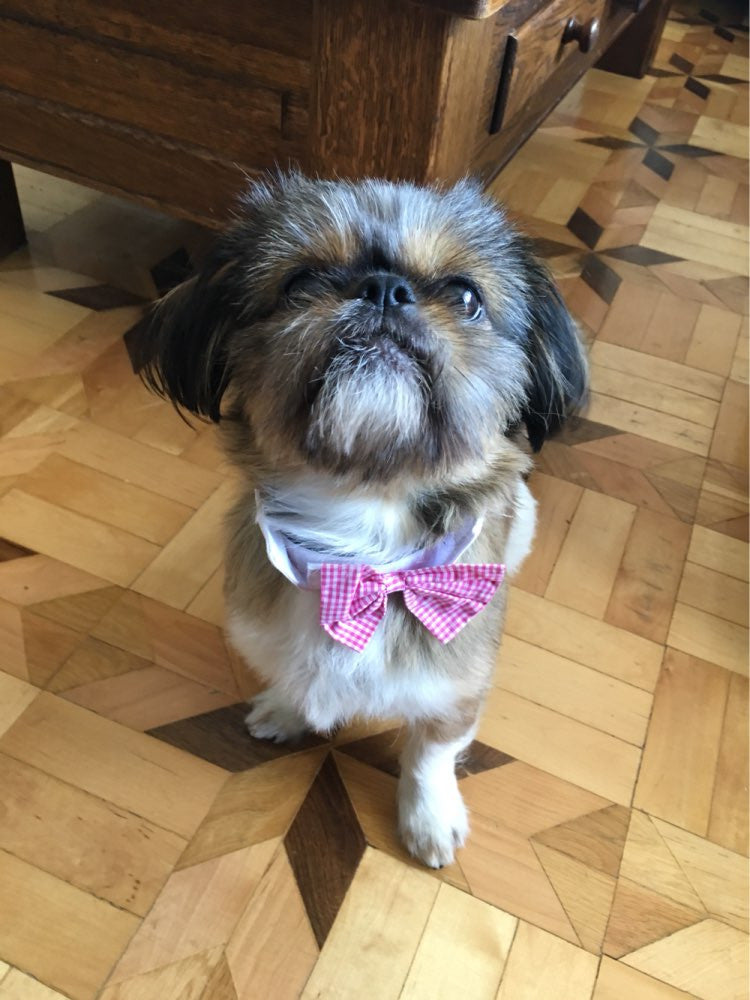 Cat/Dog Bow Ties Pink