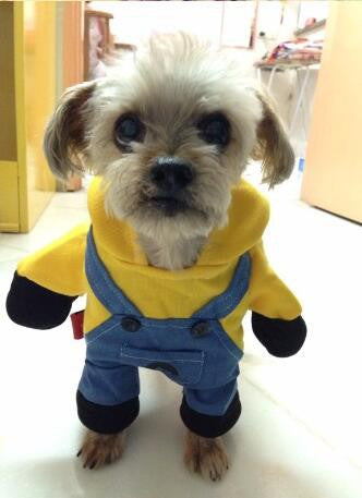 Full Minion Dog Costume