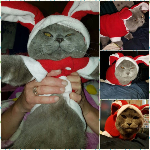 Bunny Cat  Costume Red