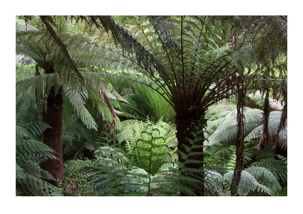 Giant Ferns - Tropical Gardens - Cornwall