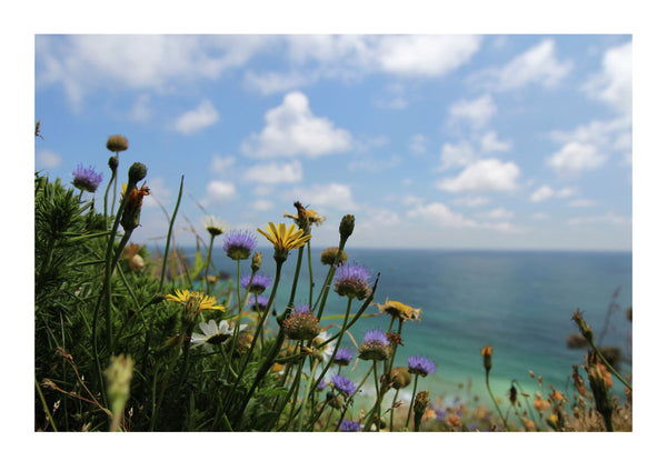 Wild Flowers On Cornish Clifftop