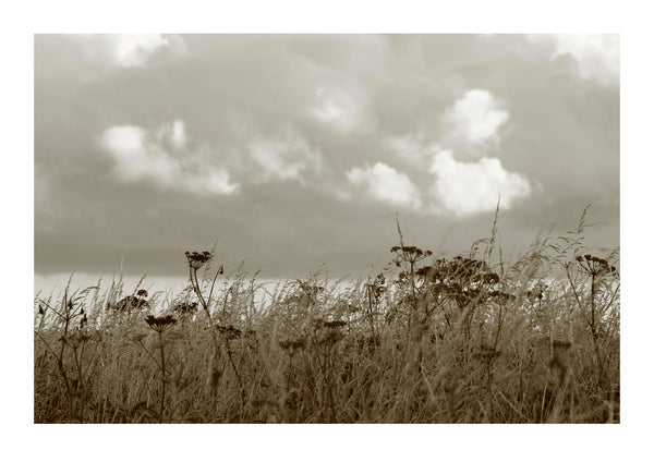 Wild Grasses and Seaview - Cornwall