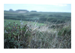 A Hedgerow in Penwith