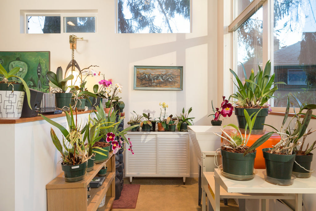 "The ""Orchid Studio""—A Tiny Backyard Studio by Seattle's First Lamp"