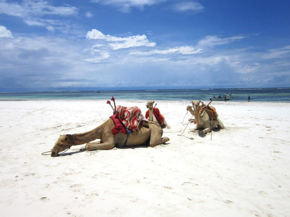 best beach wedding destinations Kenya