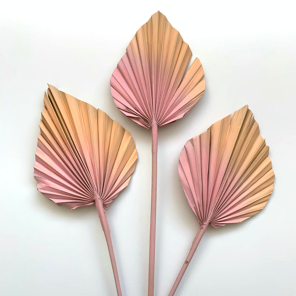 Dried Palm Spears - Soft blush