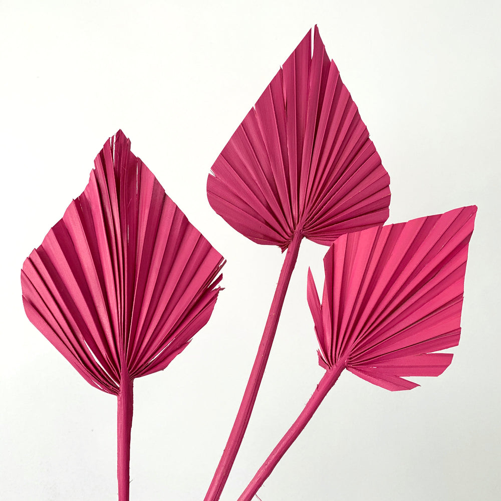 rasberry pink dried palm spears