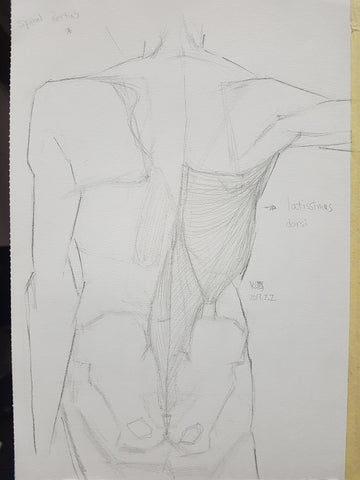 anatomy_lower back muscles