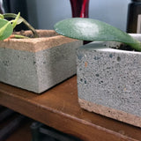 Concrete/Cork Planter