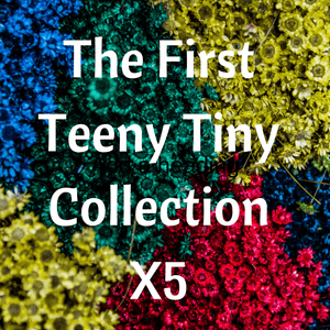 The First Teeny Tiny Collection A Well Run Life 5