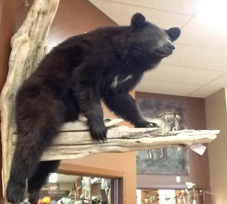 ANR Black Bear Wall Mount-American Natural Resources-Sleeping Giant