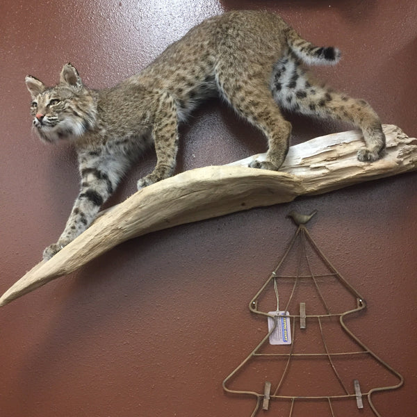 ANR Bobcat Wall Mount-American Natural Resources-Sleeping Giant