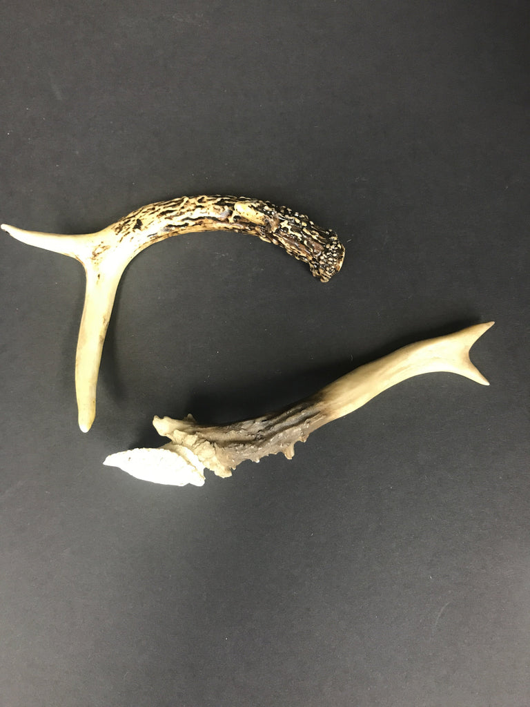 COOP Resin Deer Antler-COOP-Sleeping Giant