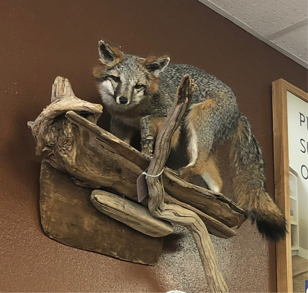 ANR Fox Wall Mount-American Natural Resources-Sleeping Giant