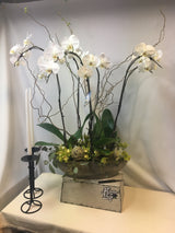 White Phaleanopsis Orchid- Deluxe Version