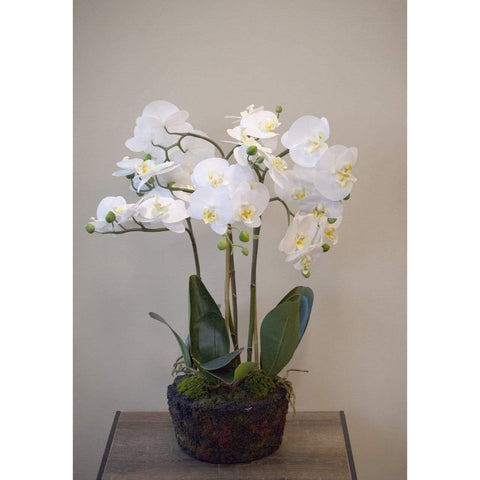 Orchid on Soil White 77cm