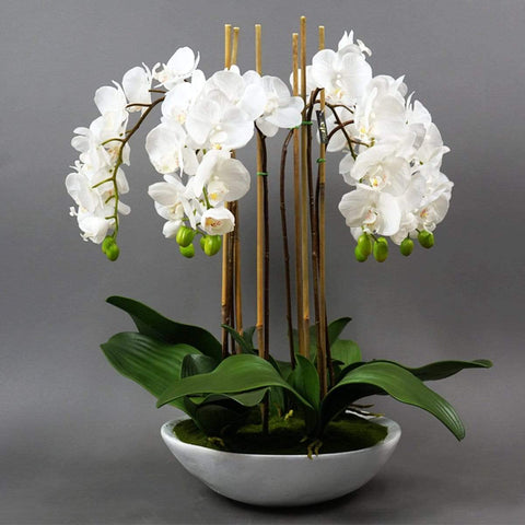Phalaenopsis Orchid In Bowl 65cm