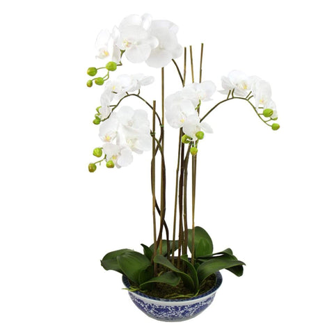 Phalaenopsis Orchid In Dynasty Bowl 70cm