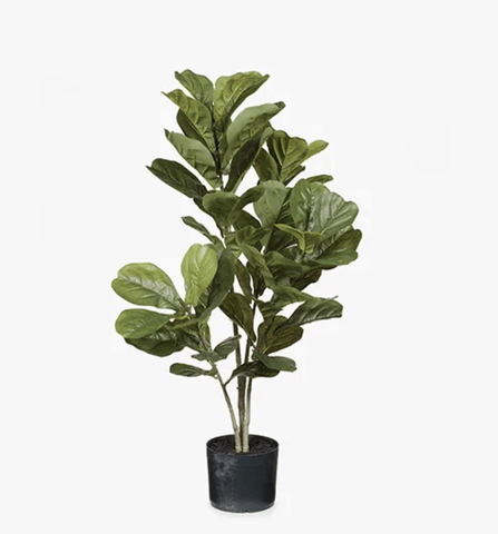 Green Fiddle Leaf Plant 98cm