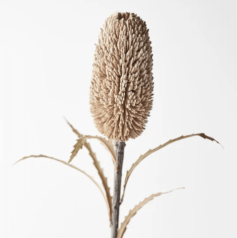 Natural Banksia Sawtooth 71cm