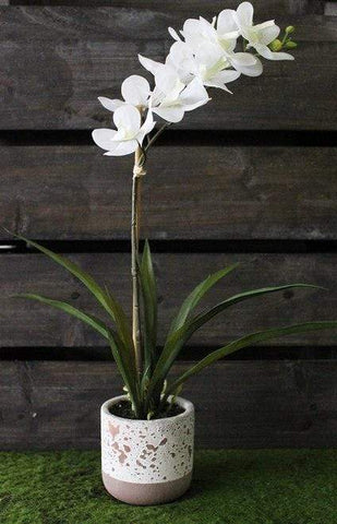 Phalaenopsis Orchid in Pot Real Touch 45cm