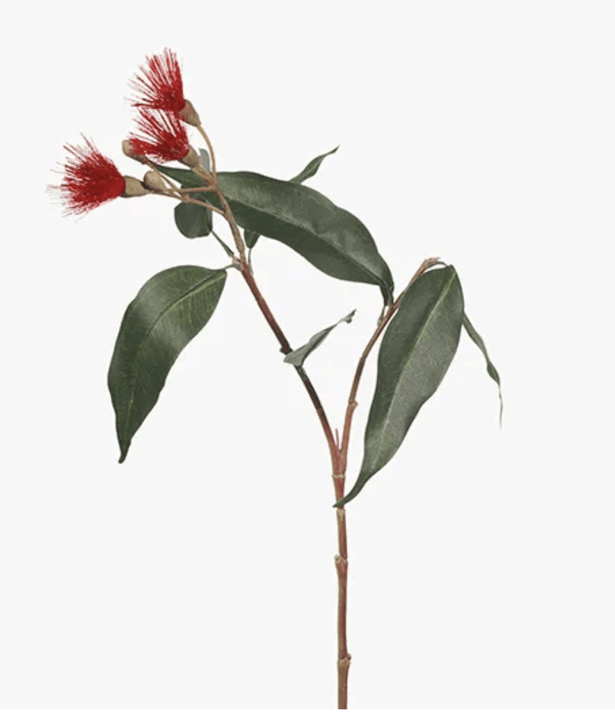 Red Flowering Eucalyptus 53cm