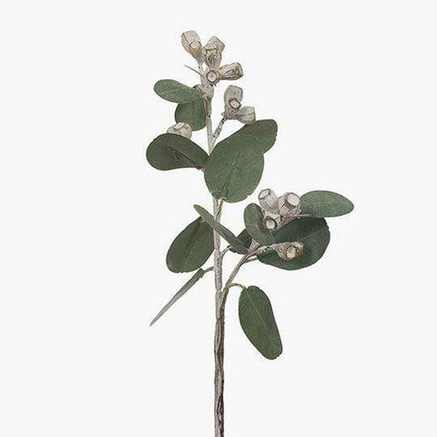 Eucalyptus Tetragona Green and White 41cm