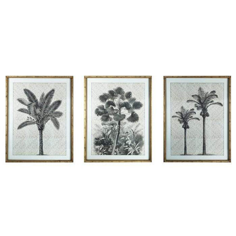 Palm Framed Prints 60x80cm