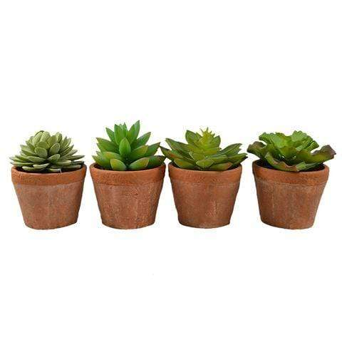 Succulent in Terracotta Pot - 4 Assorted