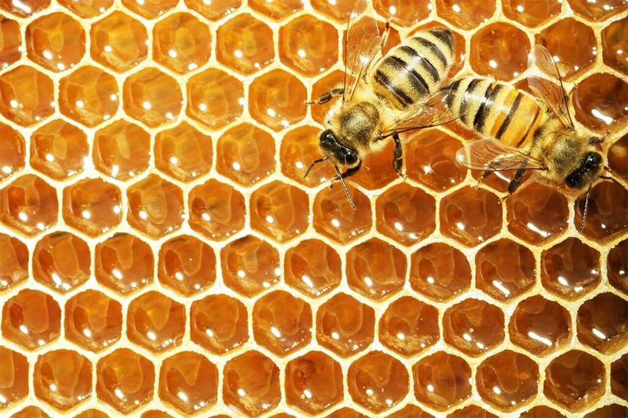 The case for Manuka Honey