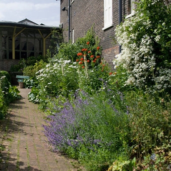 A flower bed in the Gardens Through Time at the Museum of the Home