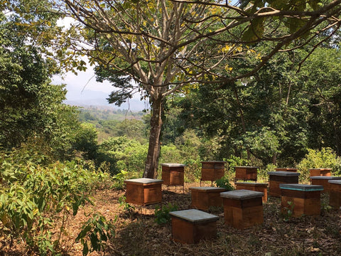 1. Organic bee hives in Latin America