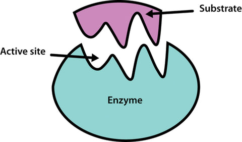 Enzymes in raw honey