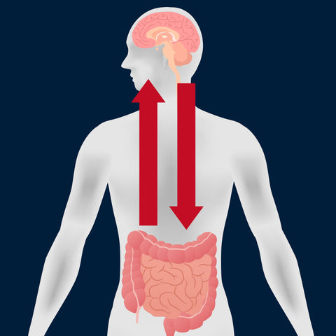 Brain Gut Bacteria - How The Food You Eat Affects How You Feel