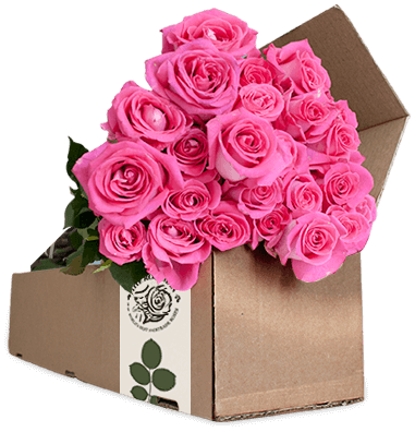 Order farm direct flowers online.