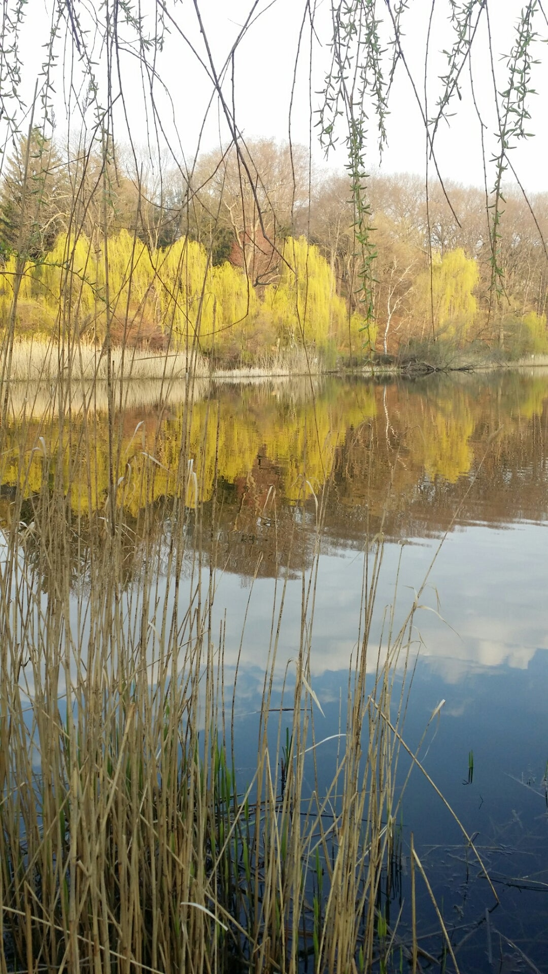 High Park Reflections