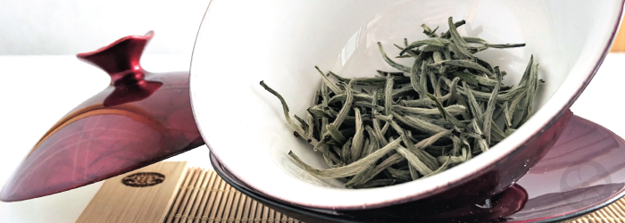 Where Does the Best White Tea Come From?