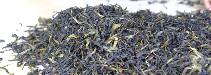 Finished phoenix oolong tea being sorted to remove stems