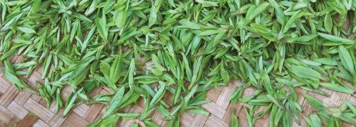 spring harvest green teas are prized all around the world.