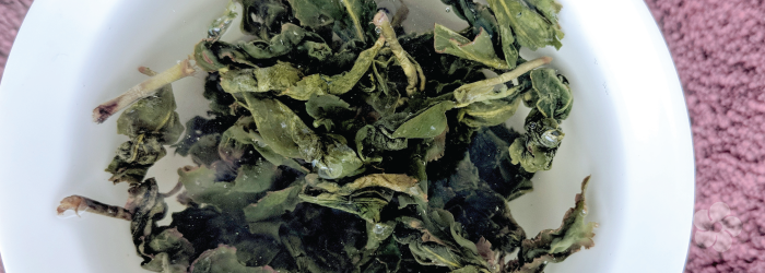 The Jin Xuan variety is sometimes called a Milk Oolong tea for its naturally creamy taste.