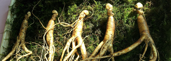 ginseng roots are highly valued but take many years to fully mature.
