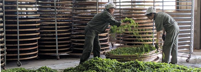 Traditional farming, skilled crafting, and minimal packaging are sustainable practices used to create high quality tea.