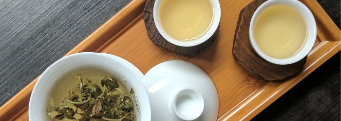 jasmine pearls unfurl in a porcelain gaiwan with two white tasting cups full of tea.