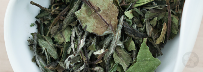Bai Mu Dan white tea from Fuding County, Fujian consists of leaf buds as well as more mature spring leaves.