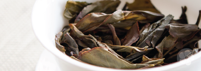 wet phoenix oolong leaves show partial oxidation
