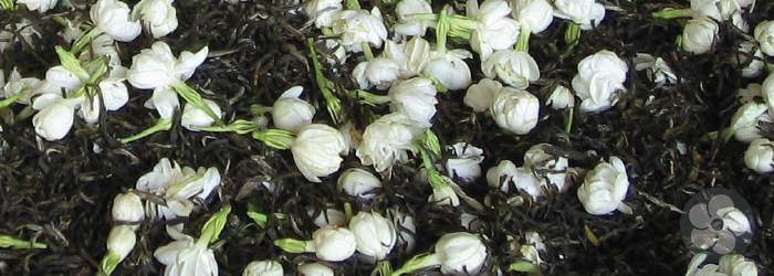 green tea leaves naturally scented with jasmine flowers
