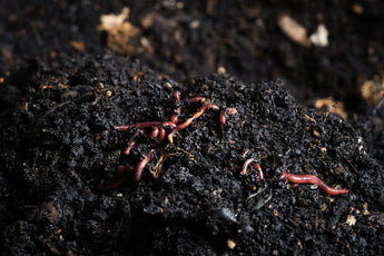 How do biological soil amendments differ from fertilizer and should they be used together?