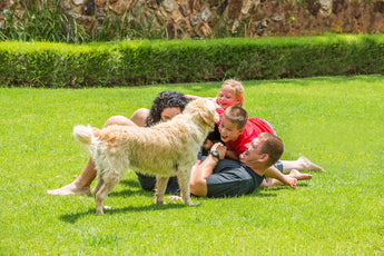 What is the most important thing you can do to minimize dog urine damage to your lawn?