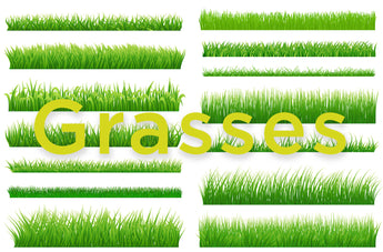 What type of grass is growing in your yard?