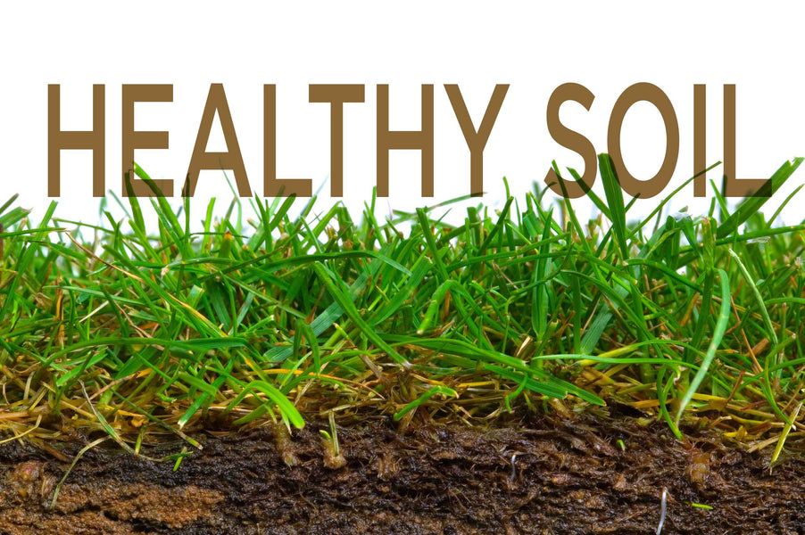 Healthy soil will improve the growth of your lawn.